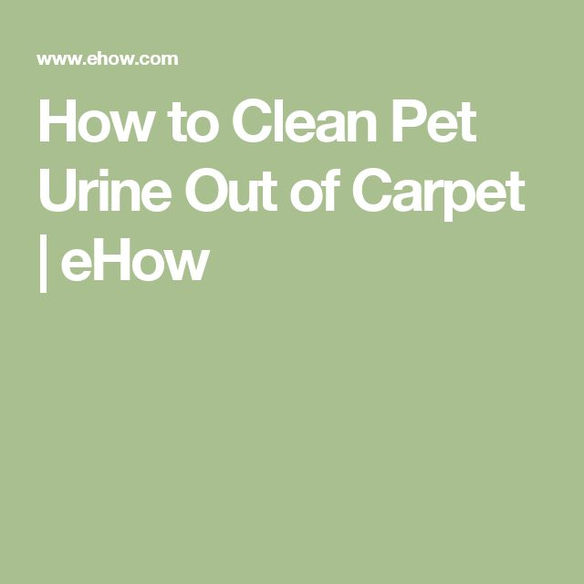 How to Clean Pet Urine Out of Carpet | eHow