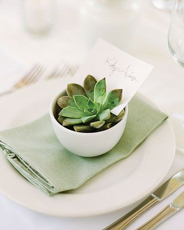 tuck name cards into succulents and put the in white tea bowls