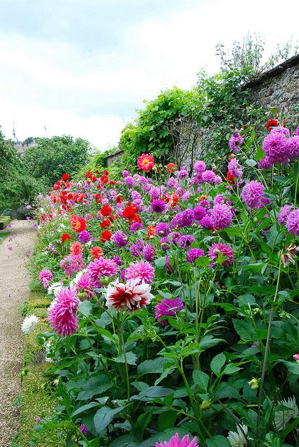 walled garden- border of Dahlias - Rousham Park
