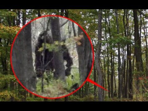 """6 Most Believable BIGFOOT Sightings / Footage - Published on Jan 14, 2016 The existence of Bigfoot has long been debated, and though there is no """"official"""" evidence of its existence, there are some that devote their lives to finding one. There are even shows devoted to finding one, like """"Finding Bigfoot."""" Here are perhaps 6 of the more believable ones (if there are any) that you can find on the web."""