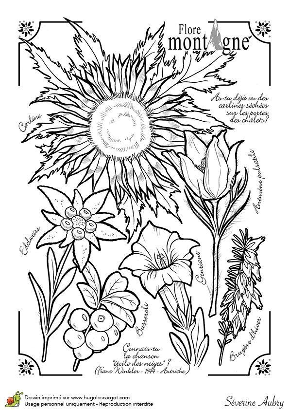 Dessin à colorier sur la flore de la montagne - Hugolescargot.com