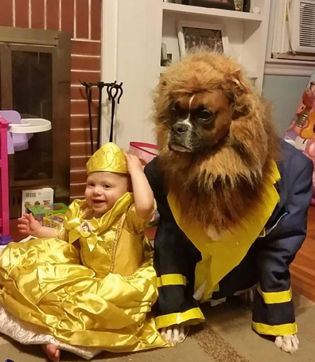 Make your dog look like a beast with this Beaty and the Beast DIY Halloween dog costume idea.