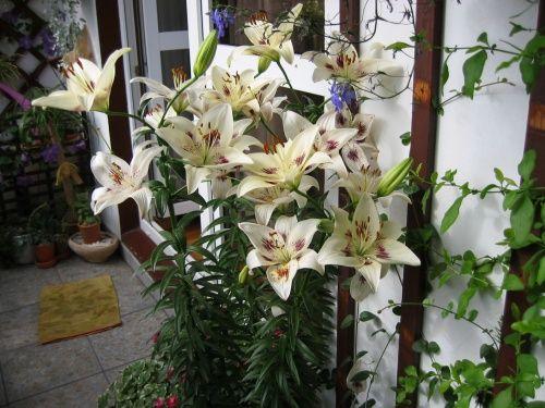 Znalezione obrazy dla zapytania kwiaty egzotyczne na taras