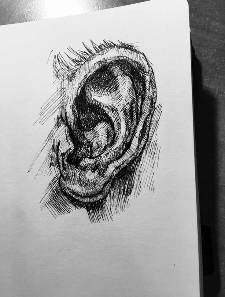 #Ear #sketch #sketchbook #pen #art #artschool ✏️