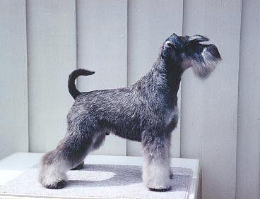 En la mayoría de los casos vemos razas caninas que nos llaman la atención pero no sabemos cuáles son sus nombres o compramos/adoptamos perro...