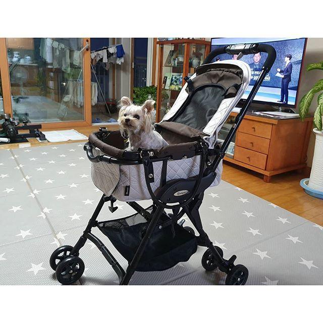 2019 07 11 목요일 ㅤㅤ 유모차 중고로 팔면 얼마정도가 적당할까요 299000원에 구입했고 한번 Nofilter Pins 2019 07 11 목요일 ㅤㅤ 유모차 중고로 팔면 얼마정도가 적당할까요 29 With Images Baby Strollers Stroller Children