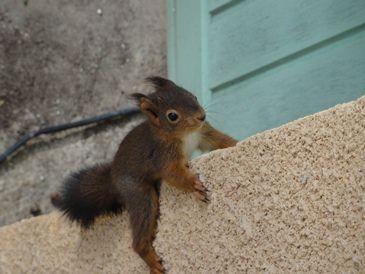 Ecureuil squirrel bed and breakfast dordogne Les Feuillantines
