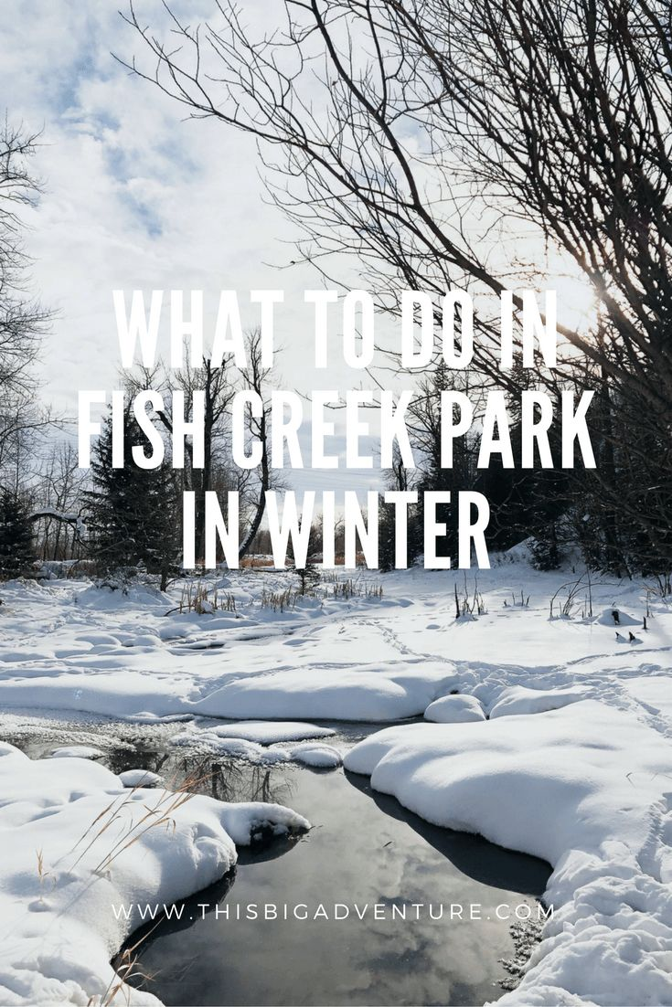 What to do in Fish Creek Provincial Park in Winter