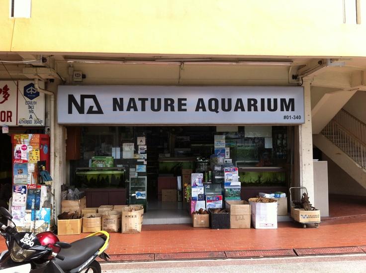 25 best ideas about nearest aquarium on pinterest for Closest fishing store