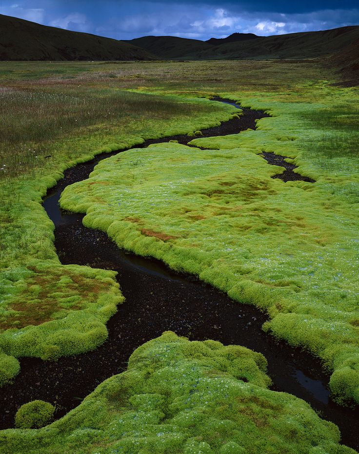 Iceland moss by F-Stop photographer David Ward #PinUpLIve