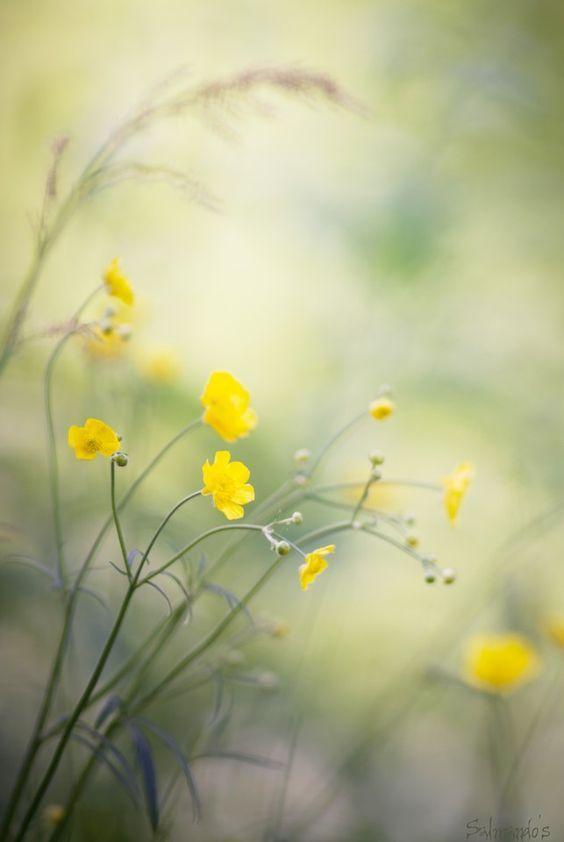~Buttercup Bouquet Cottage~