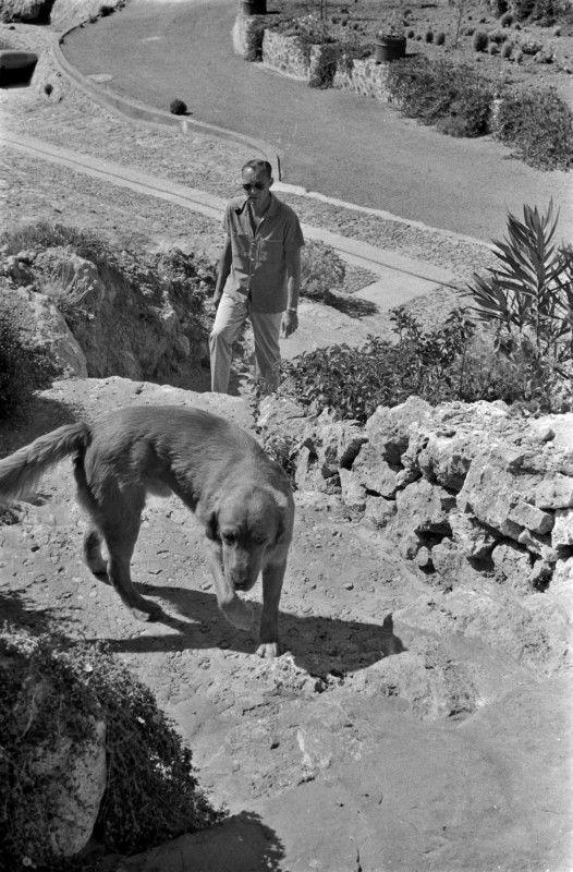 25 juli1965 Prins bernhard aan de wandel met de Golden Retriever Joris