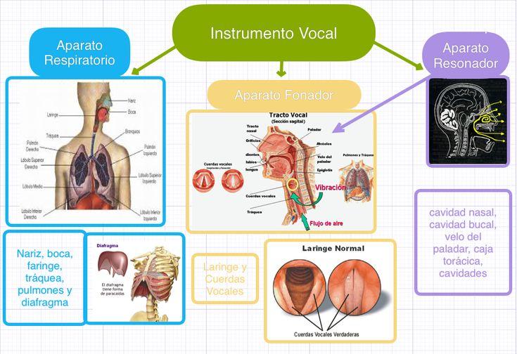 Este pin muestra la importancia que tiene la respiración para lograr la emisión de sonidos vocales.