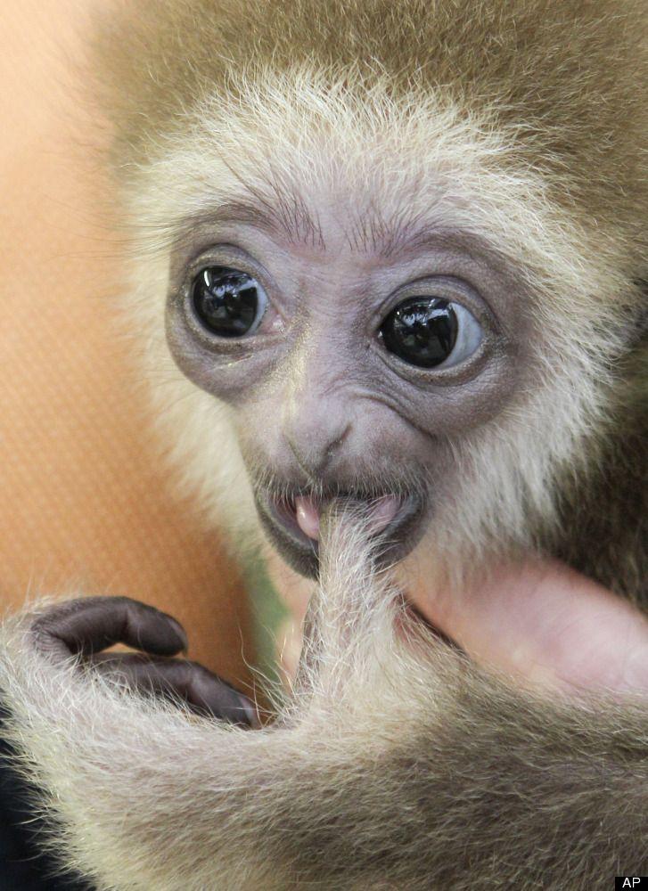 Baby Gibbons, Albino Gators, Wrestling Polar Bears And More
