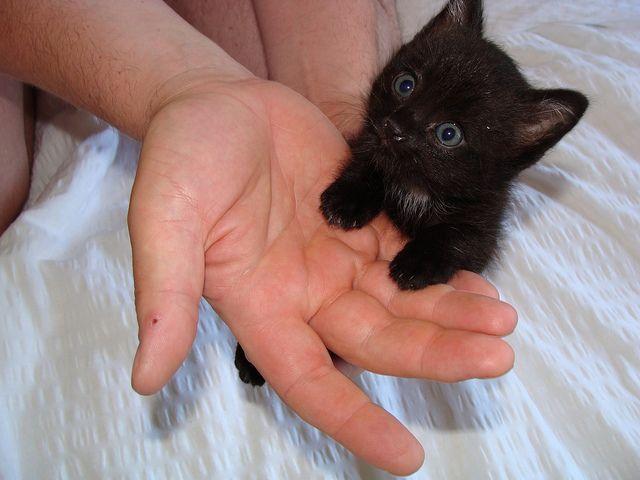Teeny weeny black cat
