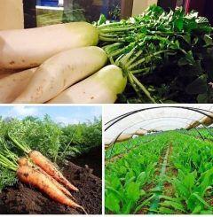 ランチ営業まもなくスタートします  本日も島原の酒井農芸さんの無農薬栽培野菜(大根人参ほうれん草)を使ったランチサラダとパスタ(下記の3種類)をご提供します  ベーコンとほうれん草と大根おろしの和風 上記金太郎卵 明太子とイクラと人参と大根おろしの和風  http://ift.tt/1swOwqz   //////////////////////////////////////////// さくさくパイ生地ピザのお店 イタリアンバジル薬院店 ランチ 11時半15時 ディナー 18翌朝5時 福岡市中央区薬院4-1-10 共立薬院ビル1F TEL 092-522-3900 ////////////////////////////////////////////  #薬院 #イタリアン #パスタ #ペンネ #カジュアル #個室あり #オーガニック #無農薬 #国産 #イタリア産 #ピザ #パイ生地 #島原 #酒井農芸 #大根 #人参 #ほうれん草 tags[福岡県]