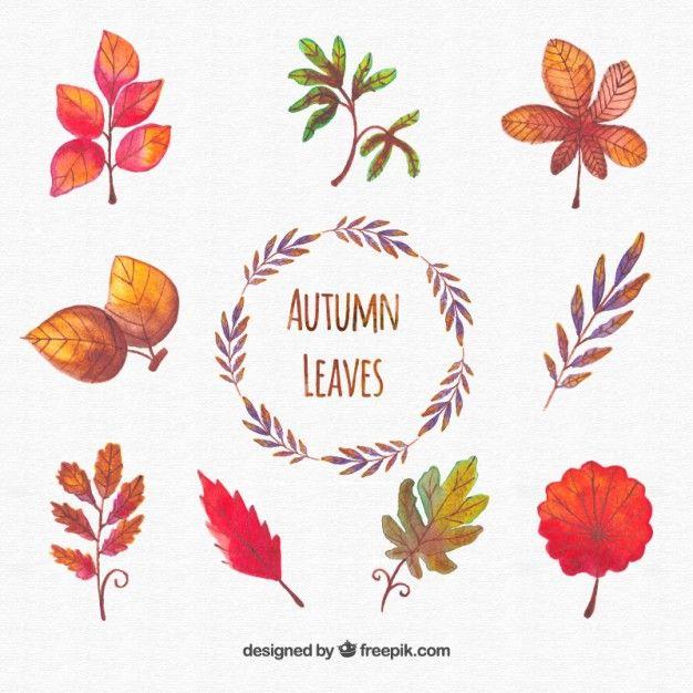 a mano collezione dipinti di foglie di autunno Vettore gratuito