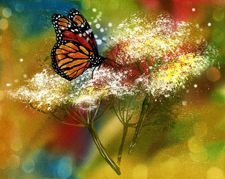 151 Best Butterfly And Flower Paintings Images On