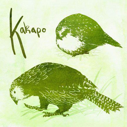 K is for Kakapo ~ greenteaceremony at greenteaceremony.deviantart.com