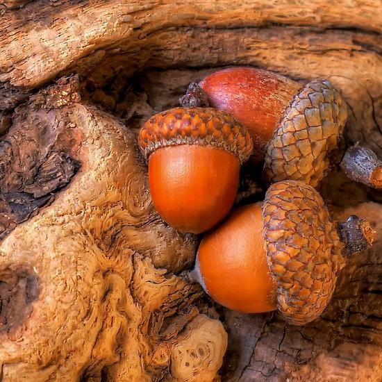 Les 90 meilleures images du tableau nuances de marron sur pinterest texture naturelle - Nuance de marron ...