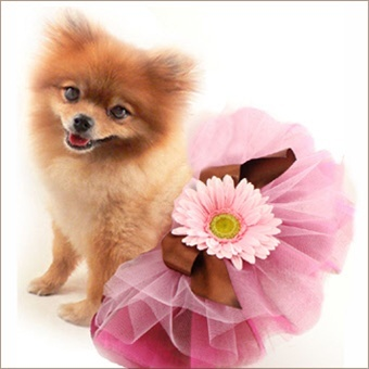 Hahaa... how cute!! I'd like to see a video of this puppy walking in her sassy tutu!! Lots of fun things at Doggie Carriers.com.