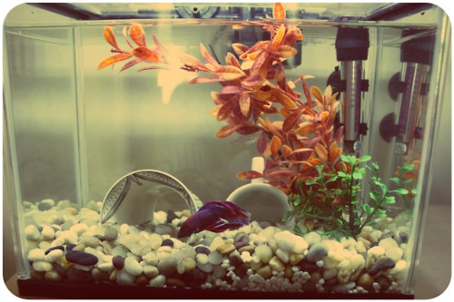 Now this is a betta tank looks to be about 5 gallons for Betta fish water change