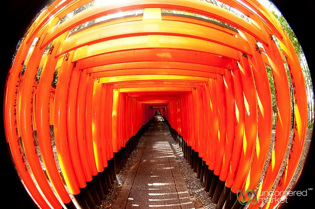 Panorama of the Week: Fushimi Inari Shrine and the Vermillion Gates — Kyoto, Japan: Colour, Color, 10 000 Vermillion, 360 Degr Panorama, Gates Torii, Vermillion Gates, Awesome Vermillion, Kyoto Japan, Inari Host