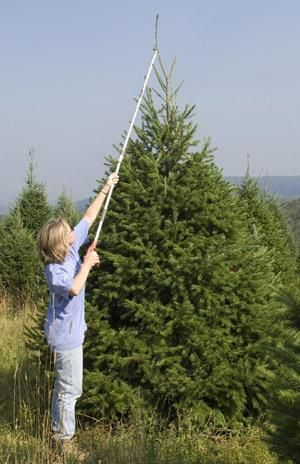 Grow your own Christmas trees - It takes some work and skill, but look at what you get after a few years!