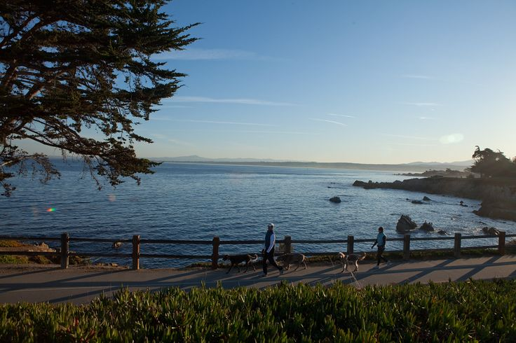 The Monterey Bike Path runs along the ocean and offers a perfect place for bikers, runners, and walkers to enjoy the beautiful Monterey coastline.