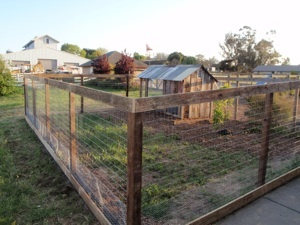 Garden Sheds, Gates & Chicken Yards this is how i want my chicken yard and garden fence to look.