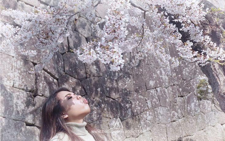 Spektakuler Hanami Dan Kehangatan Sake Hokkaido