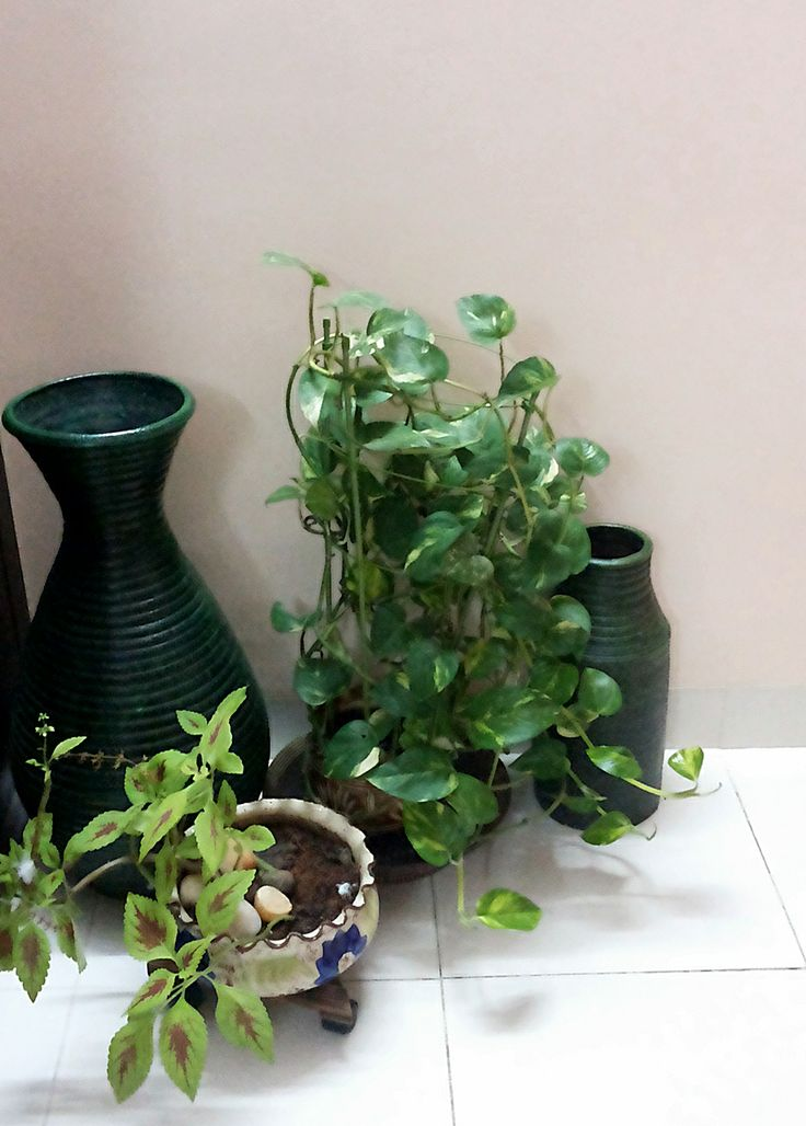 An indoor plant decoration for a corner area of the house for Decoration of indoor plants