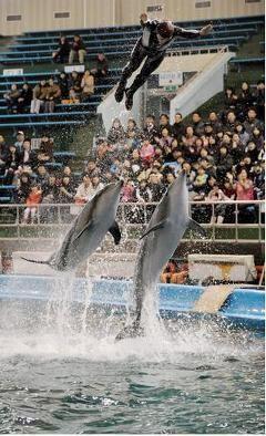 [노응근의 '글도락'] 돌고래쇼, 돌고래에게 물어보셨나요 http://noheunggeun.khan.kr/39 서울대공원 돌고래쇼는 1984년 5월1일 공원 개원과 함께 시작됐다. 볼거리가 별로 없던 때라 돌고래쇼는 남녀노소의 사랑을 받으며 바로 명물로 자리잡았다. 묘기 연습, 몸 상태, 공연 기피, 질병사 등 돌고래 관련 소식은 모두 시민의 화젯거리였다. 돌고래 관리비가 많이 들어 1993년에는 쇼가 없어질 뻔했으나 돌고래를 사려는 사람이 없어 무위에 그치기도 했다. 그렇게 폐지 위기를 넘긴 돌고래쇼는 지금까지 큰 인기를 끌고 있다.