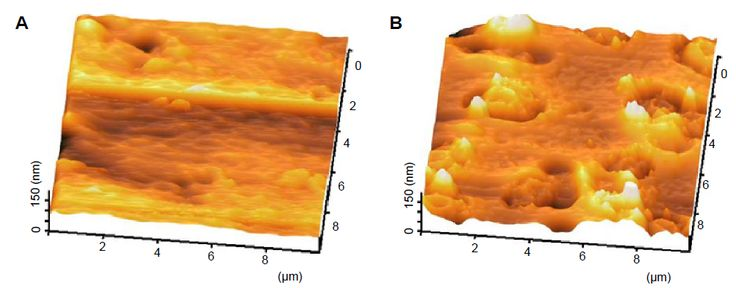 Figure 9 Representative 3D topographical view of control and 24 hours coated sample obtained by AFM.