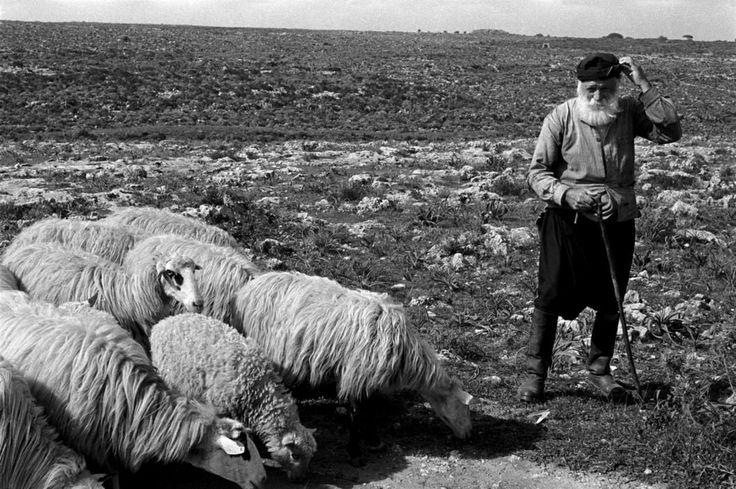 Erich Lessing Βοσκός στην Κρήτη το 1955..