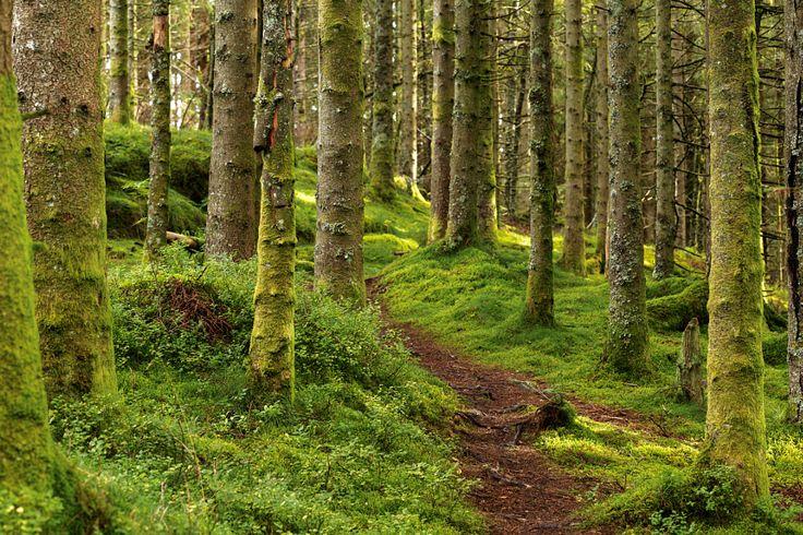 Trail in the Forest by Eirik Sørstrømmen