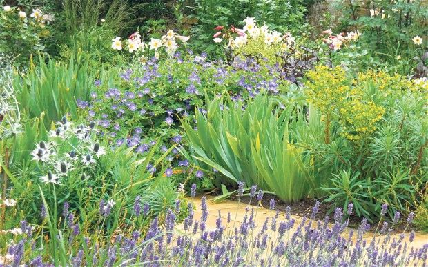 Full cover: white lilies, blue geranium, iris foliage, acid-green euphorbia, thistle-like eryngium and lavender in a border for a client