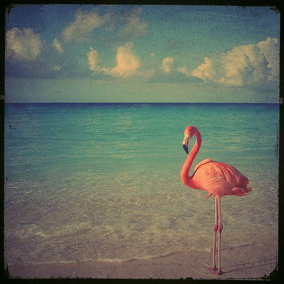 Flamingo art photo  8x8 a stunning pink flamingo by elgarboart, $30.00