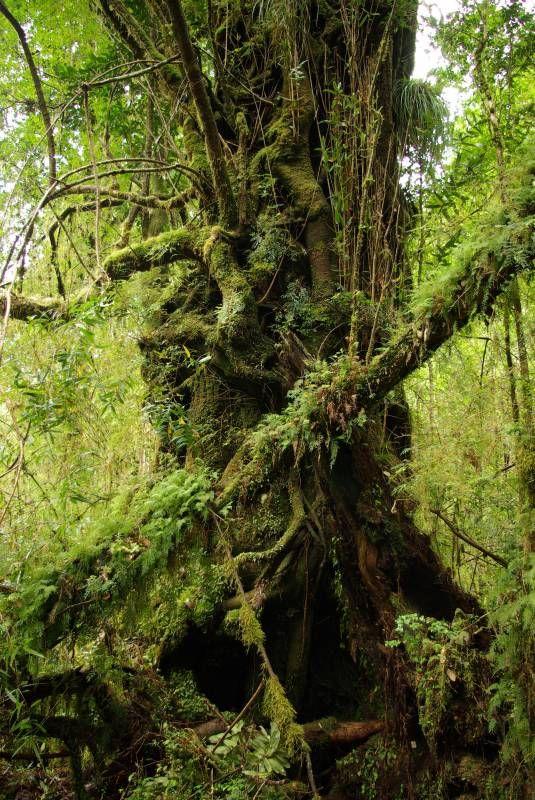 Alerce Andino National Park, Chile