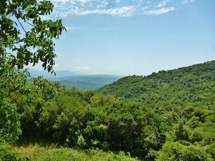 Στα ορεινά καστανοδάση της Ηπείρου. Εδώ συλλέγουμε το μέλι καστανιάς, ένα απ' τα θρεπτικότερα μέλια λόγω της μεγάλης παρουσίας γύρης.Chestnut forest on Pindus mountain range in northern Greece.