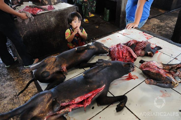 Child Looks On As Dogs Are Prepared At A Tomohon Meat