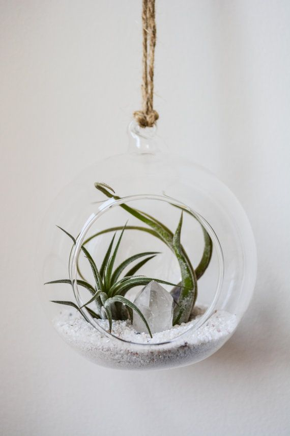 Hanging Glass Terrarium Round by TheModimalist on Etsy
