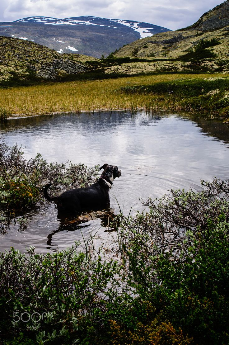 Dog in a mountain lake - null