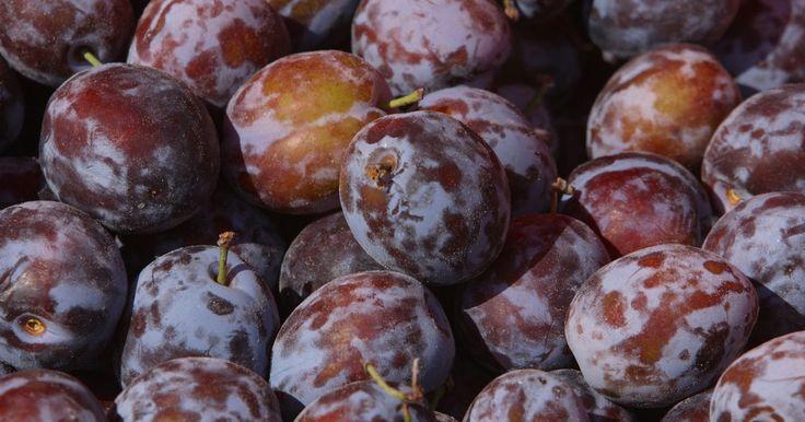 Como cuidar de uma árvore de ameixa. A ameixa é utilizada na culinária e panificação. É sensível e pode ser cultivada na maioria dos tipos de solos bem drenados. É ótima para alguém se familiarizar com o cultivo de árvores frutíferas pois é auto-fértil e relativamente fácil de cultivar. Aqui será apresentado como cuidar de uma árvore de ameixa.