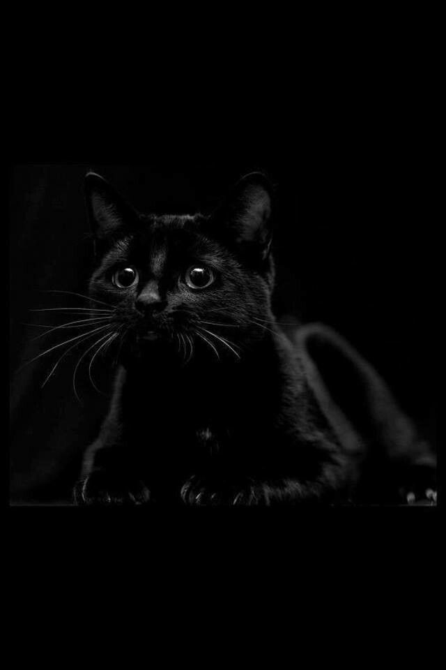 I love black cats <3