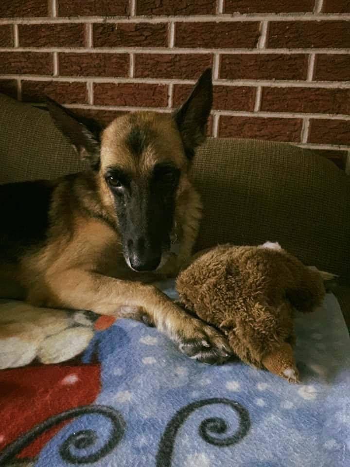 Adopt Nysa On Save A Dog German Shepherd Dogs Shepherd Dog