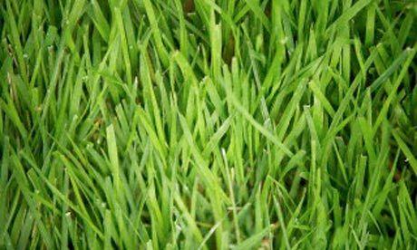 turf care - sensible, and chem free