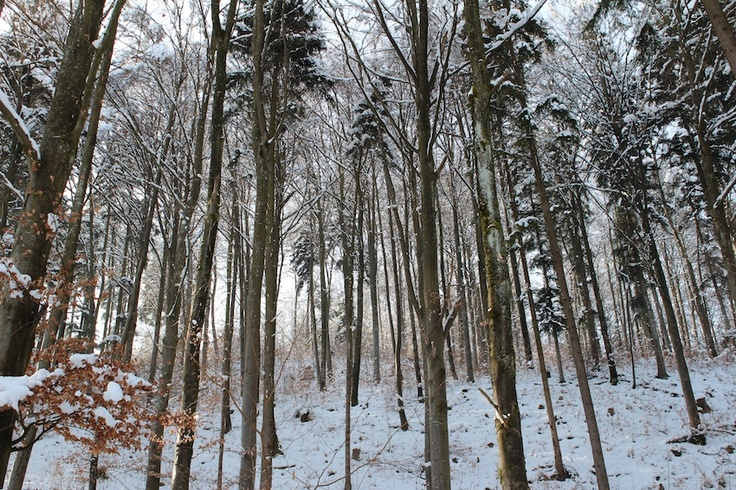 バレンタインデーの本日、関係ないけど、森の木々はこんな感じ。