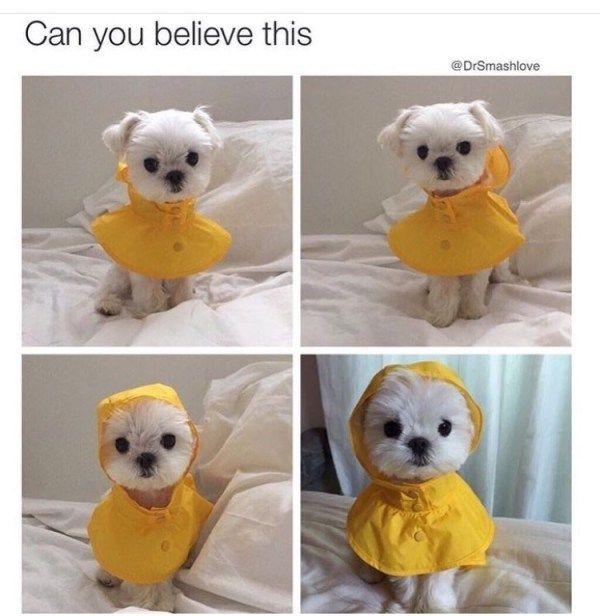 62 lustige pelzige Tier-Meme, zum Sie zu helfen, den Tag weg zu lachen