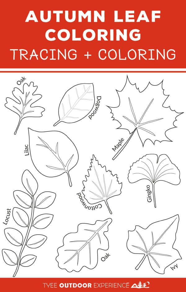 Easy Autumn Leaf Activities And Tracing Page Tyee Outdoor Experience Autumn Leaves Art Leaf Drawing Fall Leaves Drawing